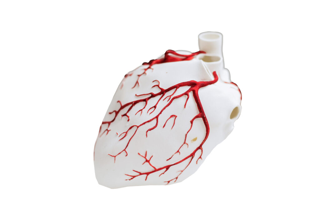 Model of heart. 3D Printing